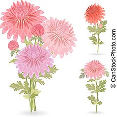collection of beautiful chrysanthemums for your design.