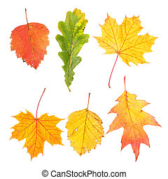 Collection of beautiful colourful autumn leaves