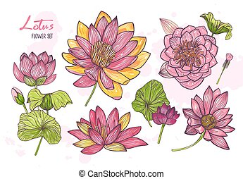 Collection of beautiful detailed botanical drawings of blooming lotus. Set of gorgeous exotic romantic flowers, buds and leaves isolated on white background. Floral hand drawn vector illustration.