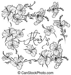 Collection of beautiful hibiscus flowers in engraved style