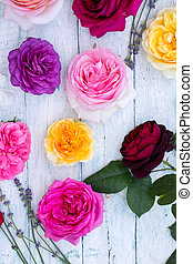 multi-colored roses, top view