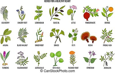 Collection of best herbs for healthy heart
