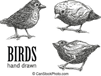 collection of birds. vector eps8