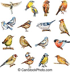 collection of birds. watercolor painting