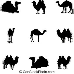 Collection of black camels, silhouette on a white background