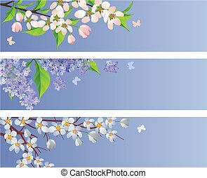 Collection of blossoming branches of apple, lilac and cherry