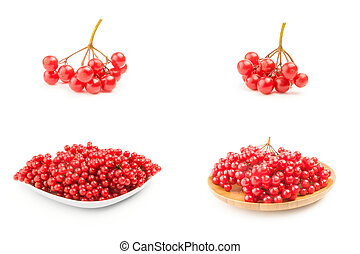 Collection of branches of viburnum on a white background cutout