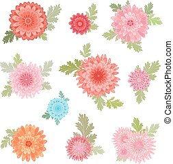 collection of chrysanthemums for your design.