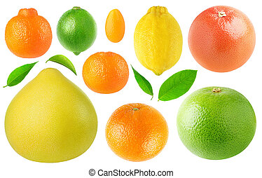 Collection of citrus fruits