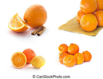 Collection of citrus fruits isolates on white