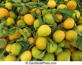 Collection of clementines.