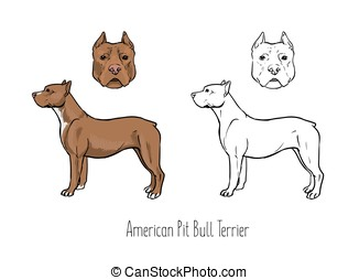 Collection of colored and monochrome contour drawings of head and full body of American Pit Bull Terrier, front and side views. Intelligent guard dog of short-haired breed. Vector illustration.
