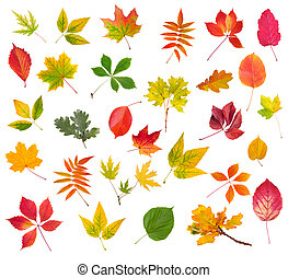 Collection of colorful autumn leaves isolated on white background