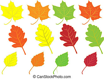 collection of colorful autumn leaves