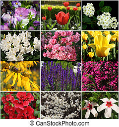 collection of colorful flowers