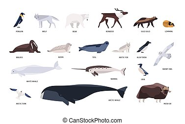 Collection of cute polar animals, birds, marine mammals...