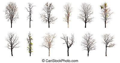 Collection of dead tree isolated on white background