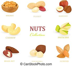 collection of delicious nuts for your design