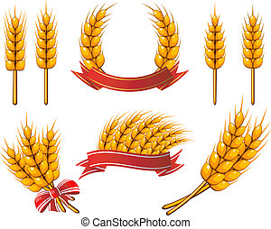 Vector collection of design elements. Wheat. EPS 8, AI, JPEG