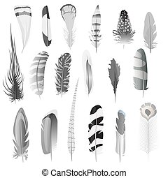 Collection of detailed black and white style bird feathers set. Decoration elements. Vector illustration.