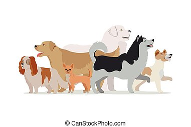 Collection of Different Dogs Isolated on White