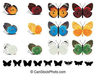 Collection of different tropical butterflies on a white background
