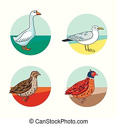 Collection of different type of birds - Collection of...