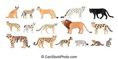 Collection of different wild and domestic cats. Exotic...