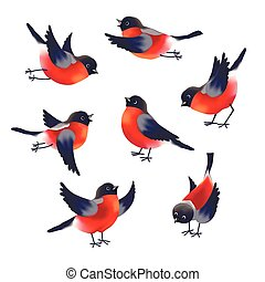 Collection of diffirent colorful images of Bullfinches isolated on white background. Vector illustration