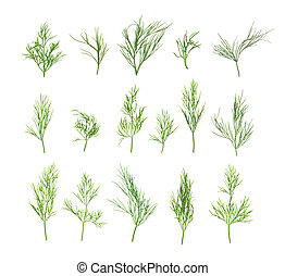 collection of dill isolated on white background