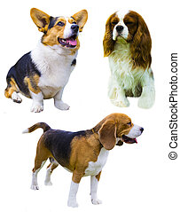 Collection of dogs on a white background