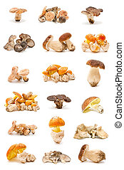 collection of edible mushrooms isolated on white background