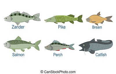 Collection of Fish Species with Name Subscription, Zander, Pike, Bream , Salmon, Perch, Catfish Vector Illustration