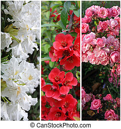 collection of flowers: pink, red and white