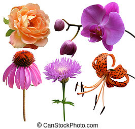 collection of flowers