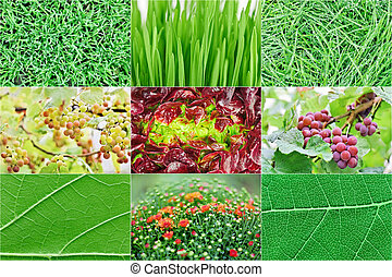 Collection of fresh green nature plant backgrounds