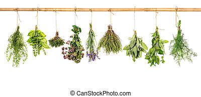 Collection of fresh herbs. Basil, sage, dill, thyme, mint, lavender