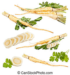 Collection of fresh parsley with root leaf