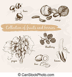 Collection of fruits and berries. Set of hand drawn graphic ...