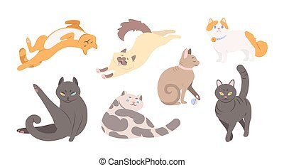 Collection of funny cats of various breeds lying, sitting, washi