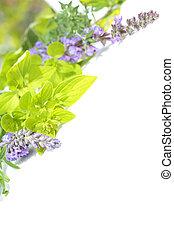 Collection of garden herbs
