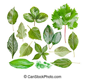 Collection of garden leaves, isolated on white background