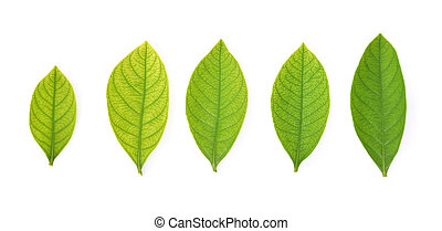 Collection of garden leaves on white background. Top view.