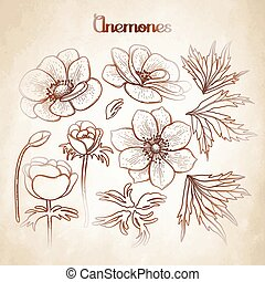 Collection of graphic anemones