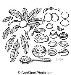 Collection of graphic shea plants. Nuts, leaves and butter ...