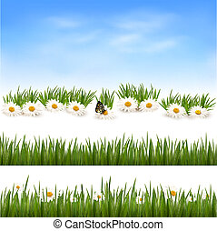 Collection of green grass backgrounds. Vector illustration.