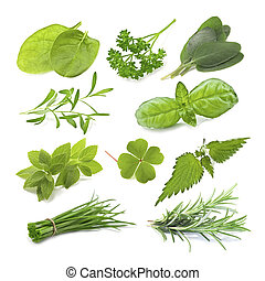 herb - collection of green herb isolated