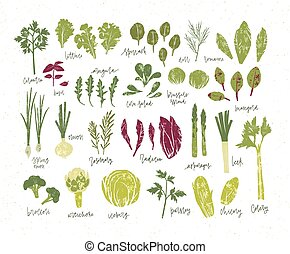 Collection of green plants. Bundle of tasty vegetables and...
