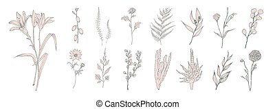 Collection of hand drawn pink flowers, ferns and succulent isolated on white background. Bundle of botanical drawings of elegant wild plants, floral decorations. Vintage natural vector illustration.