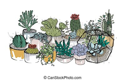 Collection of hand drawn succulents, cactuses and other desert plants growing in pots and glass vivariums. Natural home decoration. Colored vector illustration